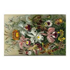 "Холст 20х30 ""<b>Орхидеи</b> (Orchideae, Ernst Haeckel)"" #2295393 от ..."