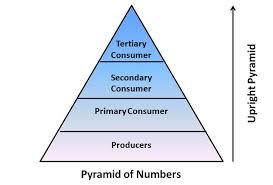 Ecosystem Pyramid Chart Biology Ecosystem Energy Flow Uncommon Ecosystem Pyramid Diagram