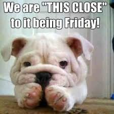Happy Friday Dogs! on Pinterest | Happy Friday, Happy Dogs and The ... via Relatably.com