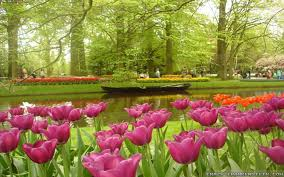 Small Picture Amazing Flower Garden wallpapers 65 Wallpapers HD Wallpapers