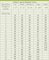 Cat Age Chart By Breed 5 Of The Sweetest Lap Cats
