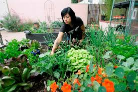 Kitchen Gardeners Roger Doiron Kitchen Gardeners International