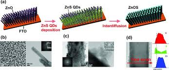 schematic of the fabrication of znos nanowire photoanode b sem and schematic of the fabrication of znos nanowire photoanode b sem and scientific diagram