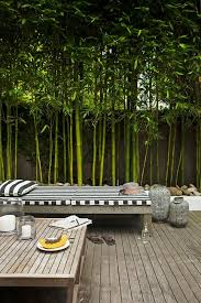 backyard ideas to block neighbors. the roots are then contained and cannot form running shoots throughout your yard neighbors backyard ideas to block