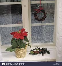 Nahaufnahme Von Roten Weihnachtsstern Im Korb Auf