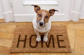 Resultado de imagen de sales de casa y dejas al cachorro
