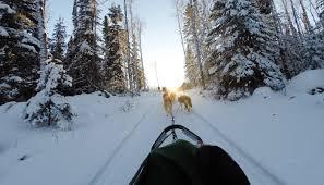 dog sledding in mammoth lakes