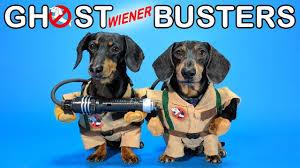 Ep #4: GHOSTWIENERBUSTERS - (<b>Funny</b>, & Spooky <b>Dog</b> Video for ...