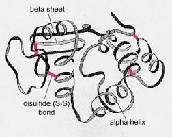Tertiary Structure of a Protein