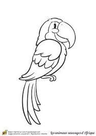 animaux sauvages afrique le perroquet page 7 sur 16 sur hugolescargot