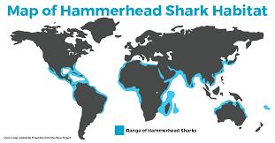 hammerhead shark habitat. Wonderful Hammerhead Exploring The Hammerhead Shark Habitat Map For L