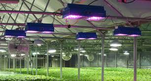 Horticultural Lighting Uk Horticulture Day Set To Reveal Benefits Of Led Crop Lighting