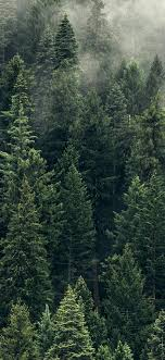 trees green fog forest wallpaper Iphone ...