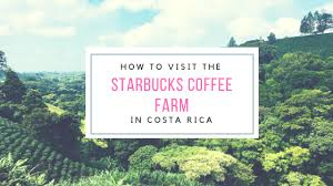This early 1900s photo shows a coffee plantation in costa rica. How To Visit The Starbucks Coffee Farm The Adventuring Millennial
