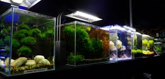 The Aquatic Design Centre Aquascape Ideas Aquascape Fish Tank For Sale