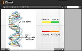 seeking biology help online is your one stop choice  biology screenshot
