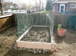 how to keep dogs out of garden designs