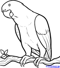 Small Picture free coloring page of african animals African Grey African Grey