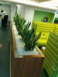 office planter boxes. minlaw tongues have another botanical name office planter boxes