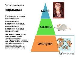 Пирамиды Реферат Скачать Экологические Пирамиды Реферат Скачать