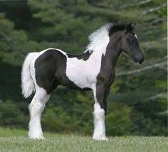 beautiful baby horses wallpaper. Unique Horses Baby Horses  Google Search Inside Beautiful Baby Horses Wallpaper N