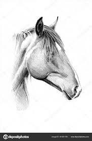 Een Paard Tekenen Kleurplaat Vor Kinderen For Paardenhoofd Tekenen