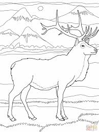 Small Picture Elk Coloring Pages Elk or Wapiti Coloring Online Super