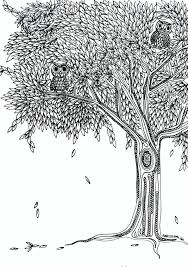 Coloring Pages Owls Tree Coloring Page Designs Canvas Tree Coloring
