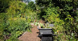 community gardens and orchards city