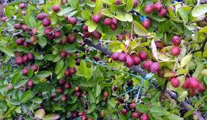 Jackfruit Farming  Farm Advice  FarmNest Agriculture CommunityKerala Fruit Trees