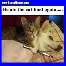 Image result for animal memes funny