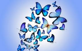 colorful butterfly wallpapers. Simple Colorful Preview Wallpaper Butterfly Colorful Blue Drawing Art Beautiful And Colorful Butterfly Wallpapers 2