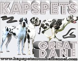 great dane chion great dane adopt great dane great dane pup pets in mumbai great dane for great dane in india