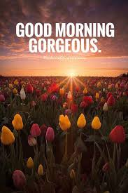 Good Morning Gorgeous Quotes Best of Good Morning Gorgeous Picture Quotes