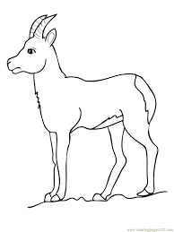 Small Picture Chamois goat antelope Coloring Page Free Goat Coloring Pages