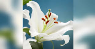 Muriel Longacre Obituary - Visitation & Funeral Information