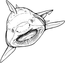 Small Picture Dazzling Coloring Pages Sharks Shark Pictures To Color Megalodon