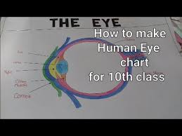 Science Chart Project Structure Of Human Eye 10th Class Science Eye Chart Model How To Draw Human Eye Step By Step