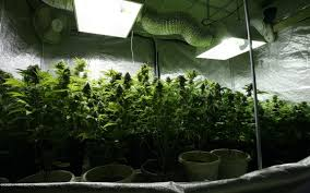 i have searched the web and noticed that you are the guy to ask about indoor lighting for cans horticulture my question is rather simple