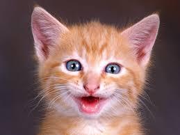 Image result for image of big grin