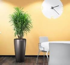 interior landscaping office. Office Plants Interior Landscaping
