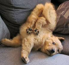 Image result for dogs sleeping