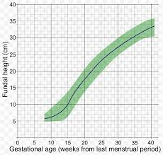 Age Height Chart Fundal Height Gestational Age Uterus Growth Chart Human