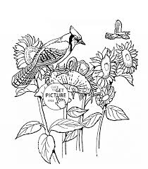 Small Picture Sunflowers and Blue Jay bird coloring page for kids flower