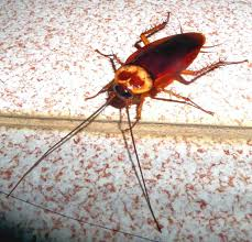 How To Get Rid Of Cockroaches With A Homemade Roach Killer
