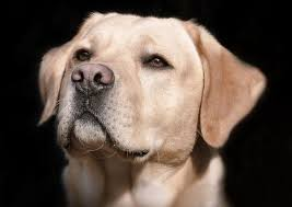 How to Relief your Dog's Itchy Skin- A natural remedy – MIDORICIDE