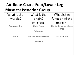 Foot Chart Origin Ankle Lower Leg Anatomy Ppt Video Online Download