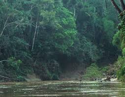 tropical rainforest raining. Simple Tropical How Much Rain Does A Rainforest Get To Tropical Rainforest Raining I