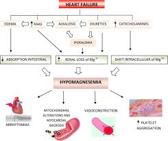Pathophysiology Of Chf Pathogenesis And Effects Of Hypomagnesemia In Chf Raas Open I
