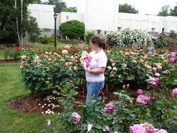 Small Picture Garden awesome rose garden plans Shade Gardens Zone 5 Easy Shade